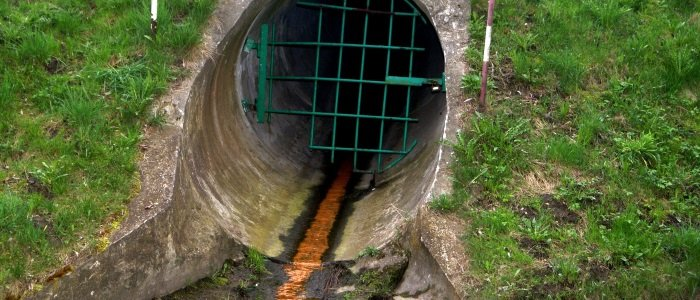 Sewage Cleanup