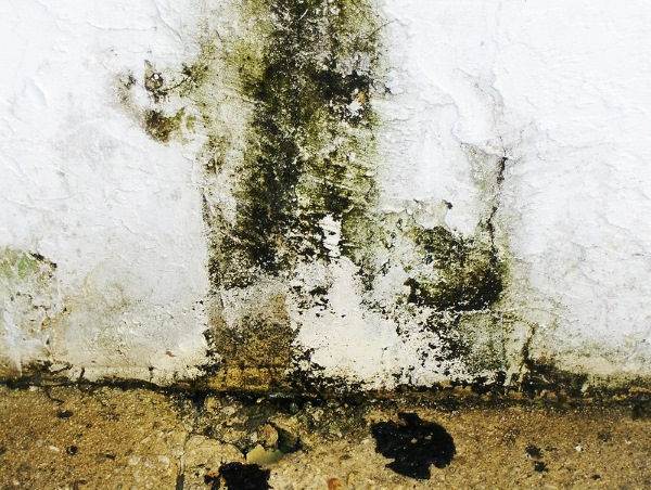 Hazards Of Mould Growth & The Importance Of Its Removal